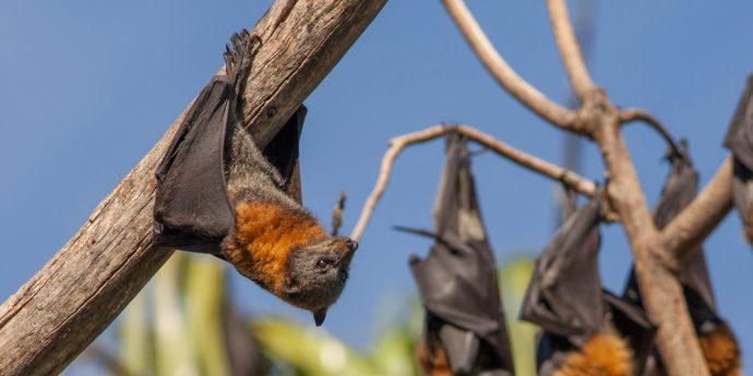 imagem de um morcego